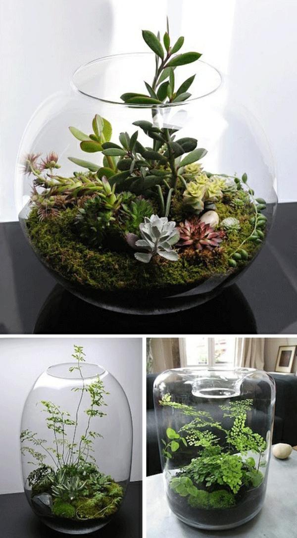 terrarium einrichten - hintergrund in weiß
