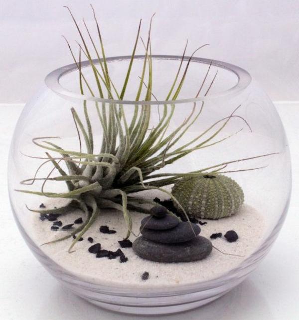 terrarium einrichten- exotische pflanzen