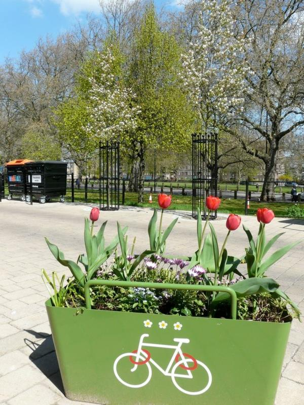 Fahrrad-Ständer-und-Blumenkasten-mit-Tulpen