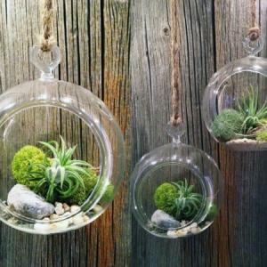 Terrarium Einrichtung: 45 kreative Ideen!