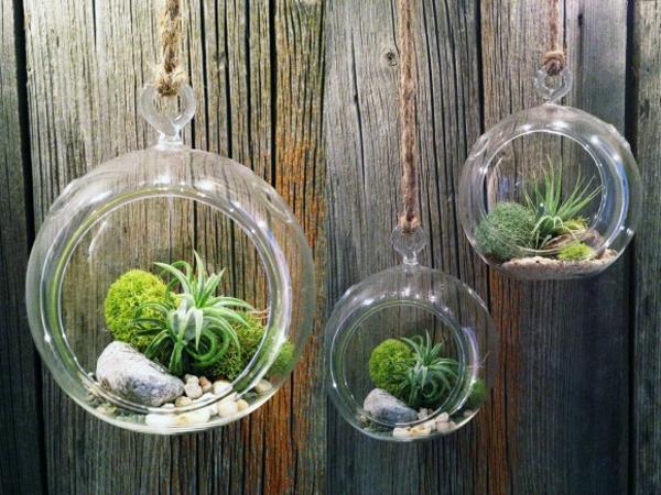 Terrarium einrichtung 45 kreative ideen - Boule en verre pour plante a suspendre ...