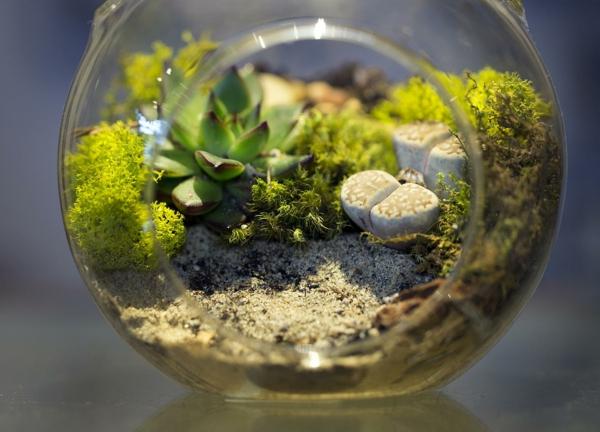 terrarium einrichtung -sehr interessant aussehen
