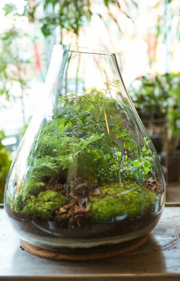 schönes terrarium einrichten