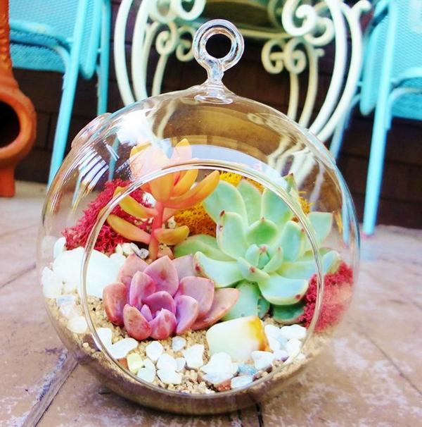 schöne bunte blumen in terrarium