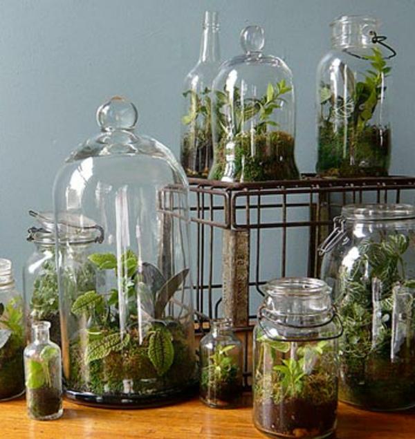 terrarium einrichten- schöne formen