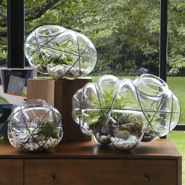 terrarium einrichten - drei super interessante modelle