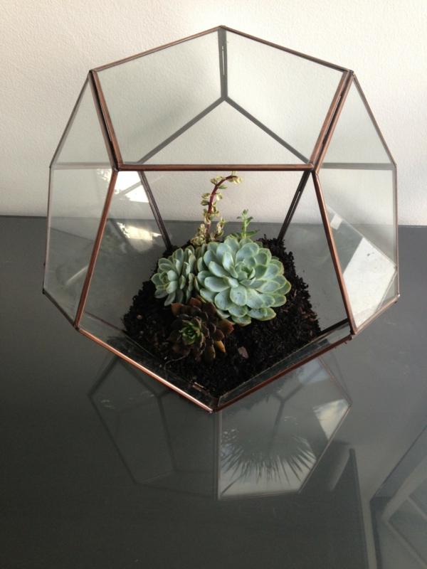 terrarium einrichtung - sehr extravagante form