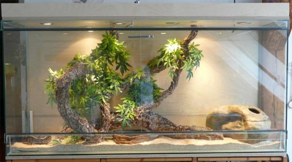 terrarium einrichtung - cooles aussehen