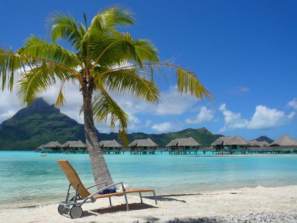 urlaub-in-französisch-polynesien-eine-palme