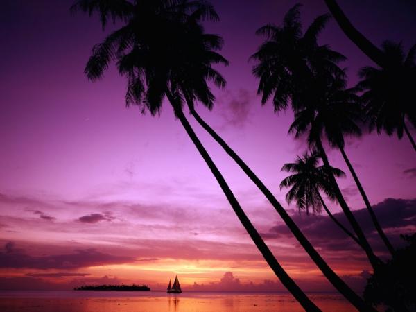 urlaub-in-französisch-polynesien-palmen