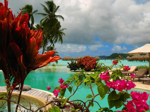urlaub-in-französisch-polynesien-schöne-blumen