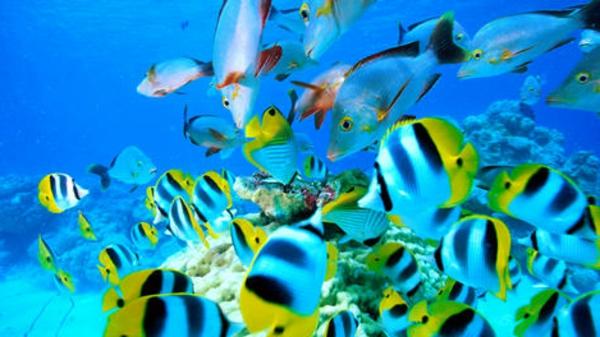 urlaub-in-französisch-polynesien-schöne-fische
