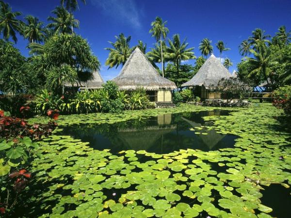 urlaub-in-französisch-polynesien-teich-mit-grünen-blättern