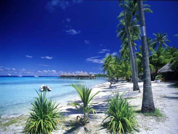 urlaub-in-französisch-polynesien-viele-palmen