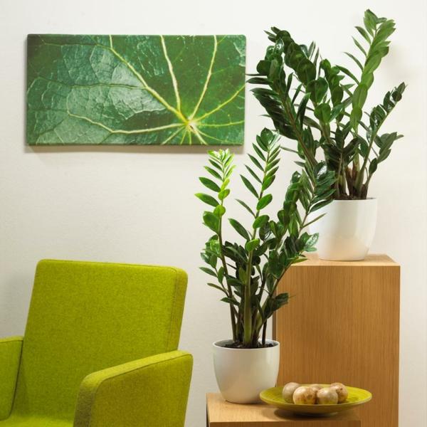 zamioculcas-zamiifolia-oder-auch-glückfeder