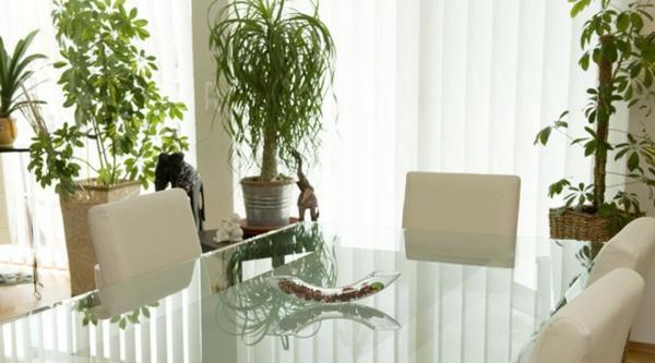 Zimmerpflanzen Für Das Perfekte Ambiente Im Haus