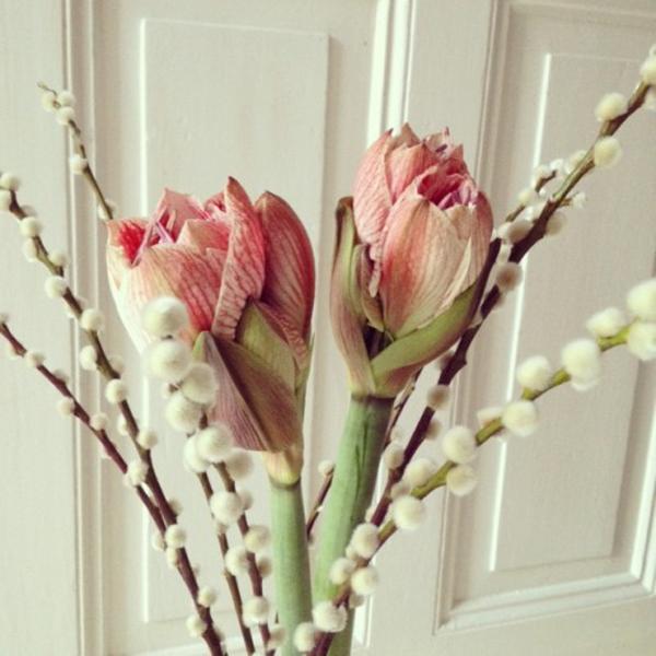 rosa-blüten-auf-weißem-hintergrund