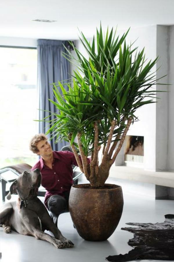 yucca-als-palme
