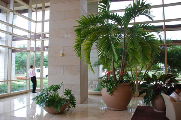 Zimmerpflanzen f r das perfekte ambiente im haus for Pflanzen innenraum