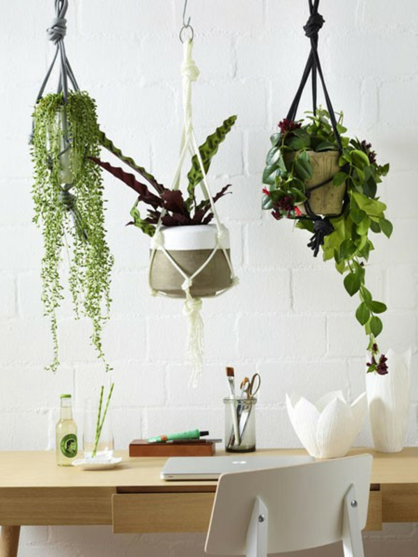 hängende-blatt-schmuck-pflanzen