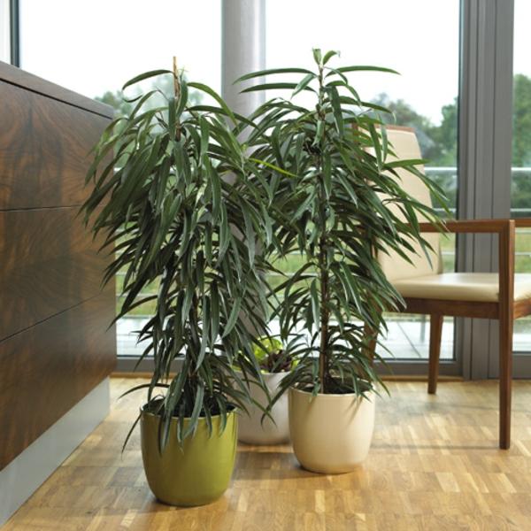 zimmerpflanzen f r das perfekte ambiente im haus. Black Bedroom Furniture Sets. Home Design Ideas