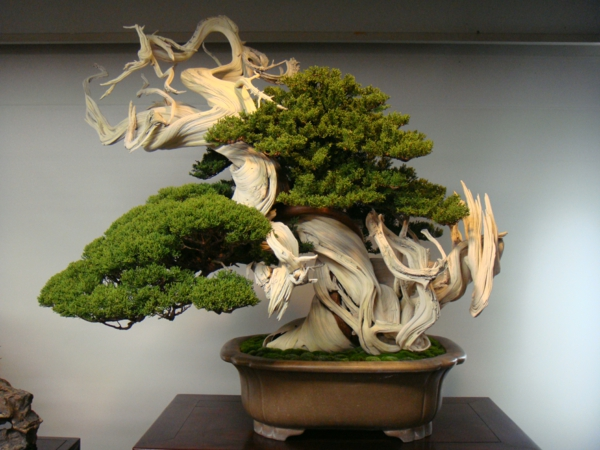 Besondere-Bonsai-Komposition-bei-Bonsai-Arten