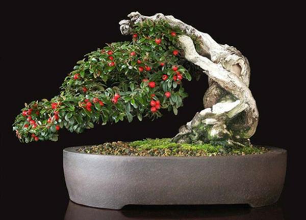 Herausragender-Bonsai-mit-Früchten