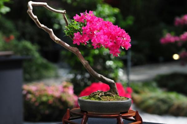Herausragender-Wuchs-bei-Bonsai-Arten