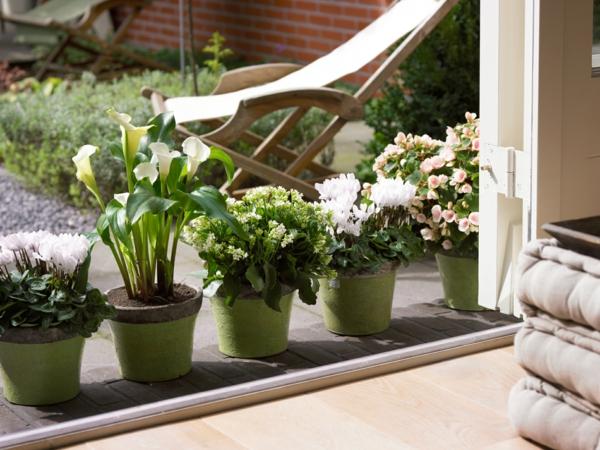fensterbank-dekoration-mit-pflanzen