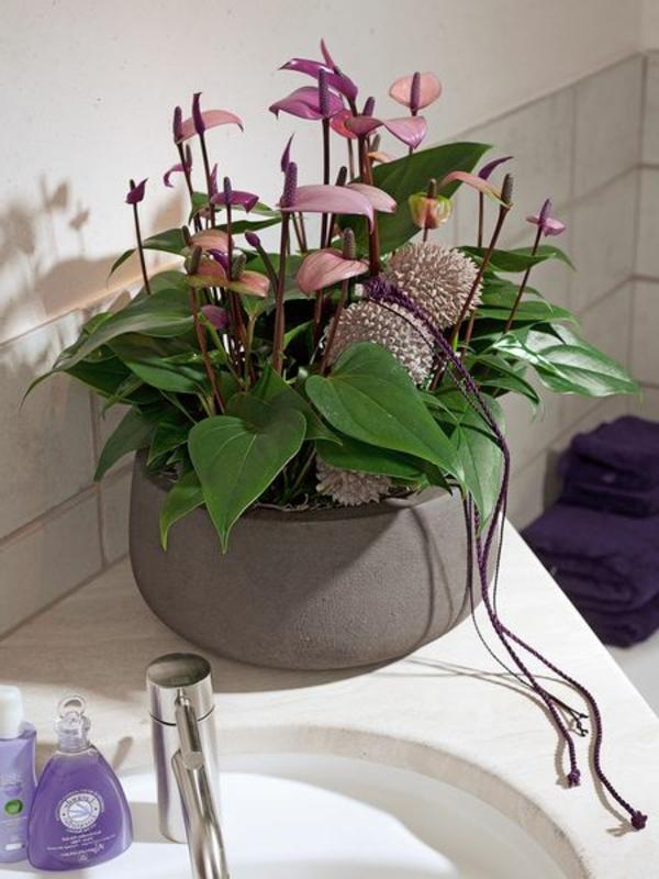 Zimmerpflanzen f r das perfekte ambiente im haus - Zimmerpflanze fur badezimmer ...