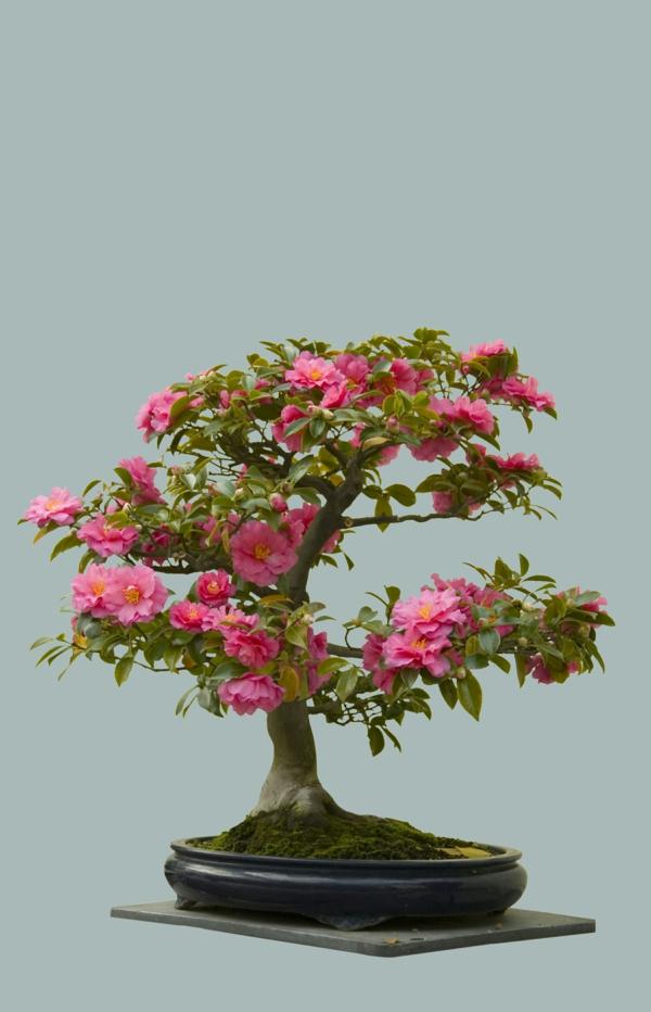 Blühende-Bonsai-Arten