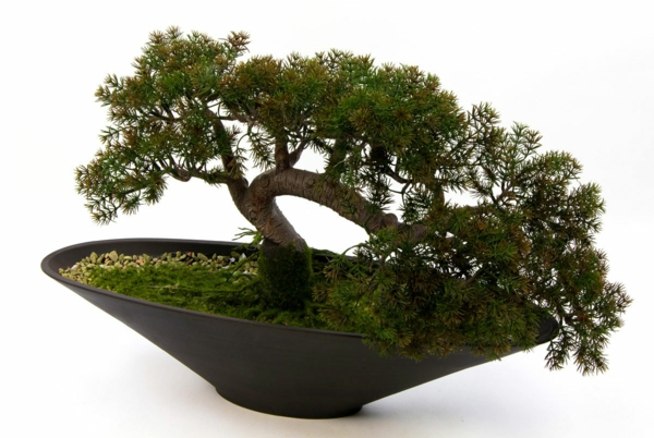 Bonsai-als-Schirmform