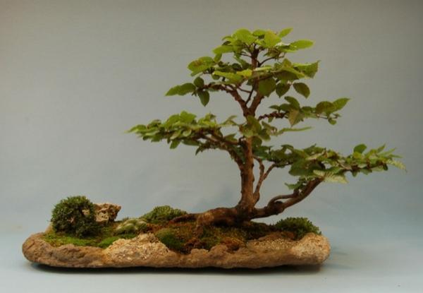 Bonsai-als-Komposition-Beispiel
