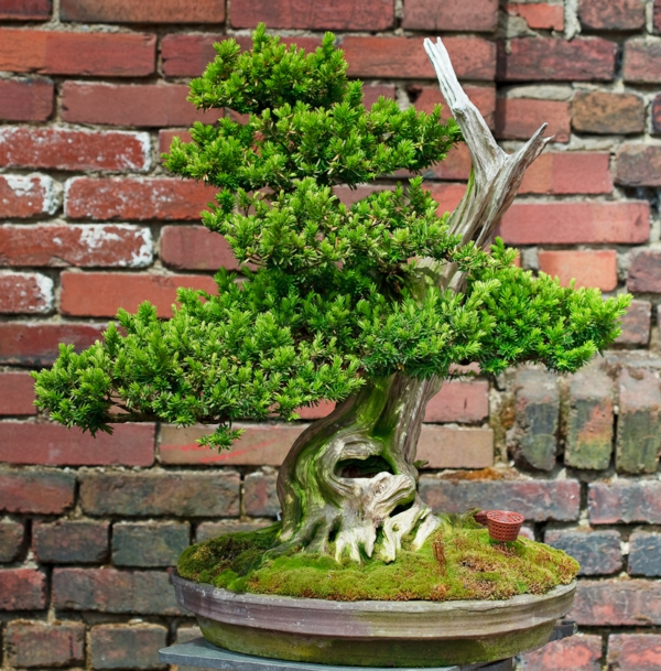 prachtvolle bonsai arten. Black Bedroom Furniture Sets. Home Design Ideas
