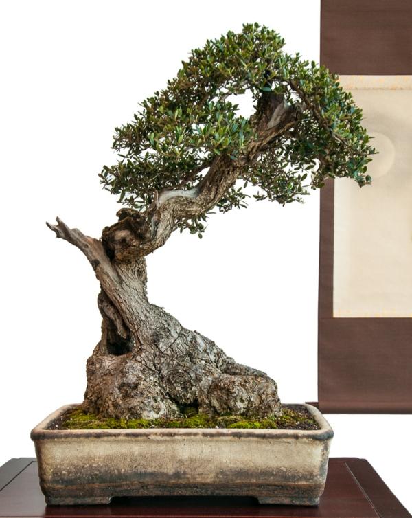 Bonsai-Arten-als-älteres-Exemplar
