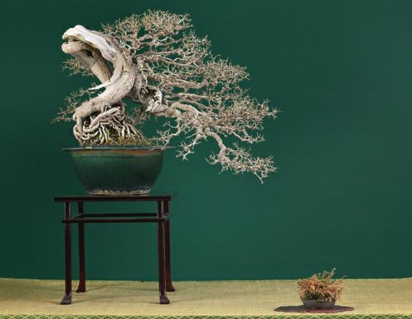 Bonsai-als-verbogener-Hochstamm