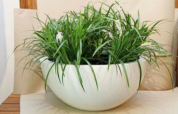 zimmer-pflanze-im-weißen-topf