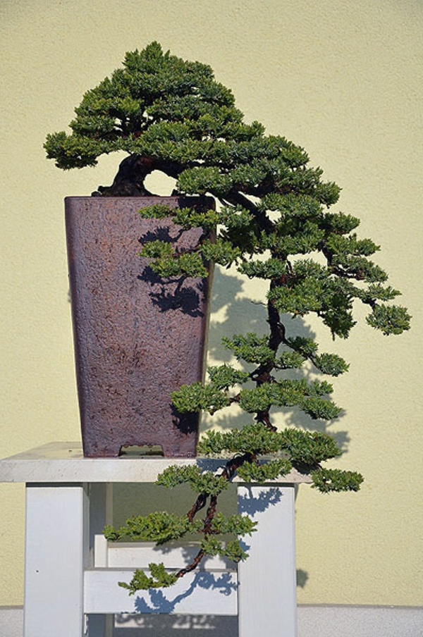 Bonsai-Arten-als-Hängeform