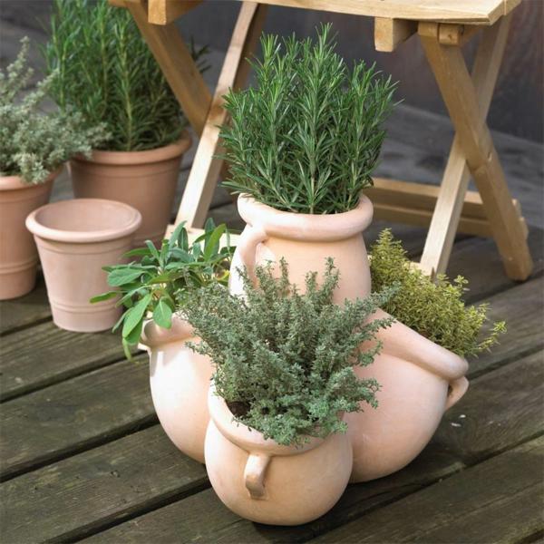 Gruppe-aus-Kräuter-Pflanzen