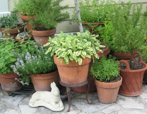 Kräutergarten-als-ästhetischer-hinschauer