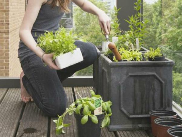 kräutergarten auf dem balkon anlegen_01:32:07 ~ egenis, Gartengerate ideen