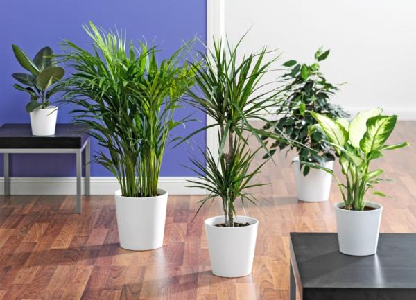 pflanzen-zimmer-blattschmuck