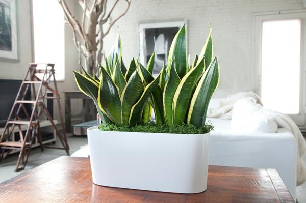Zimmerpflanzen f r das perfekte ambiente im haus for Raum pflanzen