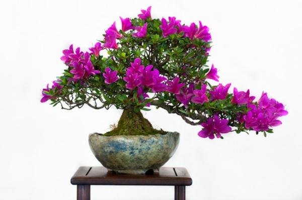 Violett-blähende-Bonsai-Arten