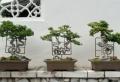 Prachtvolle Bonsai Arten