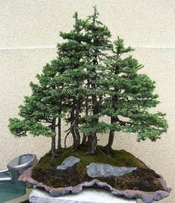 Prachtvolle bonsai arten for Bonsai pflanzen