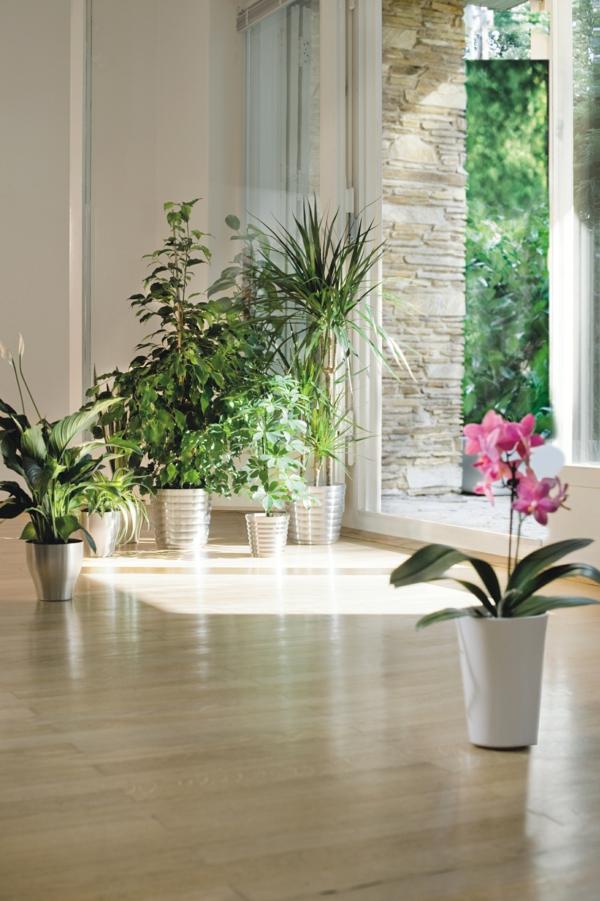 pflanzen-im-zimmer-artenreich