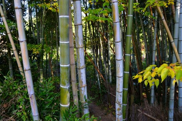 bambus-garten-ganz-einfach-und-schön-aussehend