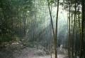 Der Bambus Garten kann einem den Atem rauben!