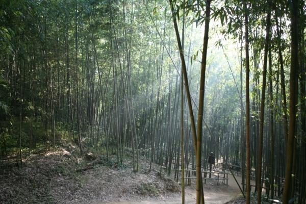 bambus-garten-in-korea-sieht-einmalig-aus